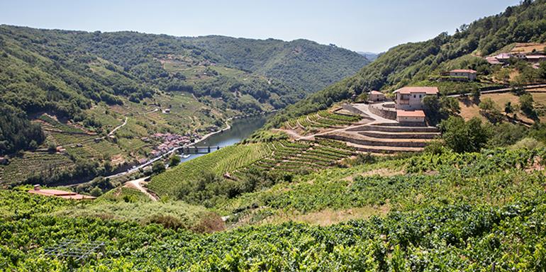 bodega-via-romana-galicia-retailactual
