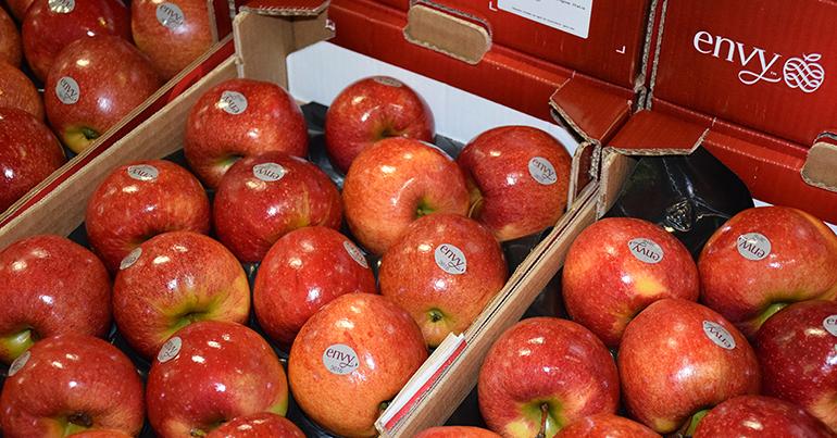 envy-temporada-manzana