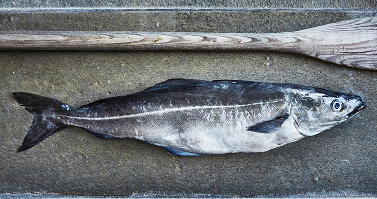 fogonero-pescado-noriego-blanco-fresco-pescaderia