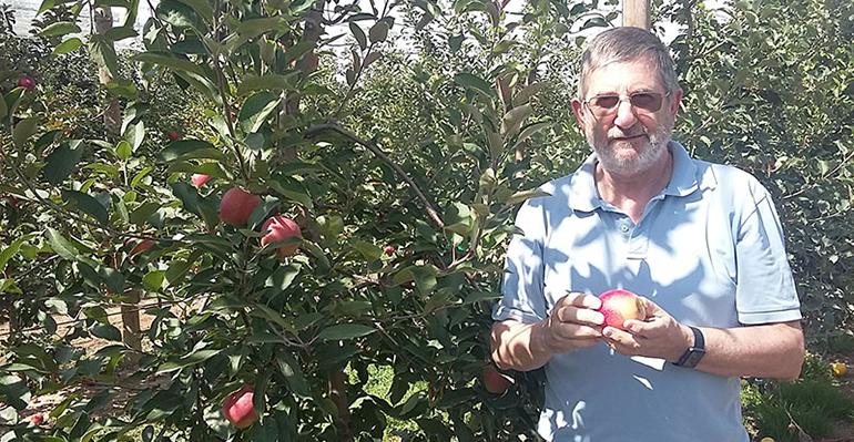 La cosecha de manzanas Kissabel supera las expectativas