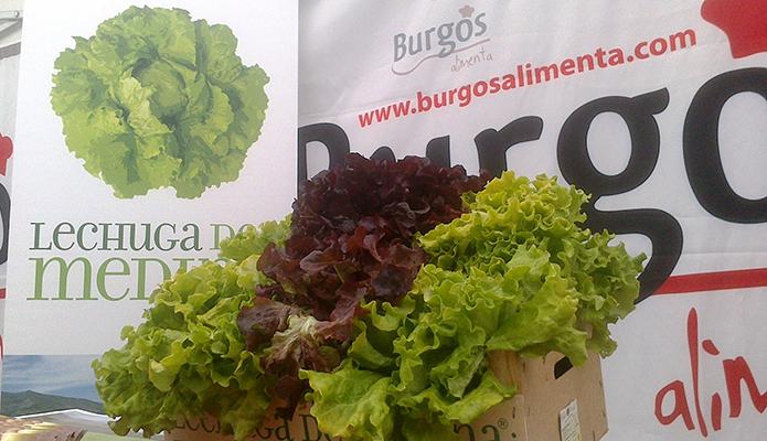 La certificación de ´Lechuga de Medina´, Burgos, se amplía ahora a la hoja de roble