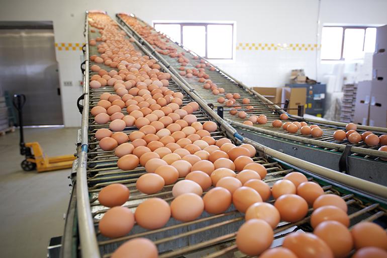 La nueva ley para el funcionamiento de la cadena alimentaria al detalle