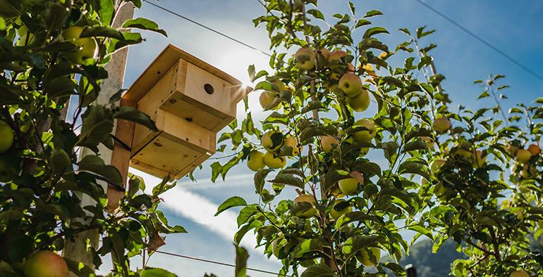 El ecosistema de Val Venosta, un paraíso donde crecen las manzanas más apreciadas de Europa