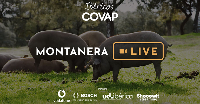 montanera-live-streaming-covap-pedroches