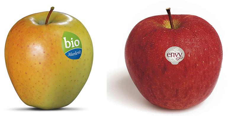 consorcio-vog-fruit-attraction