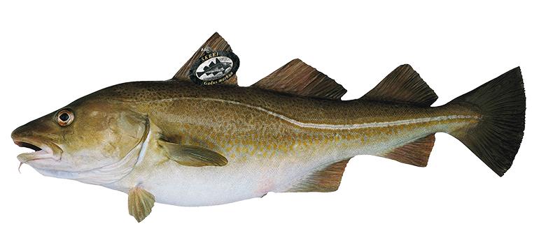skei-noruego-bacalao