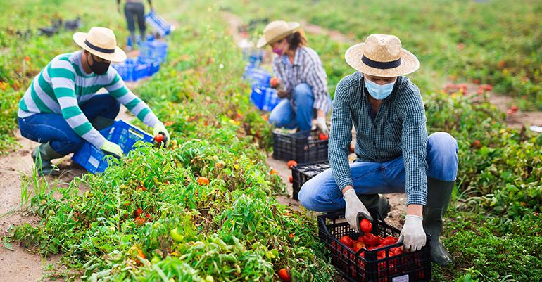Futuro de los productos ecológicos: nueva legislación a partir de 2022