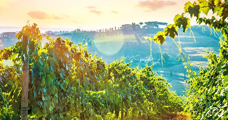 fenavin-vinos-ecologicos