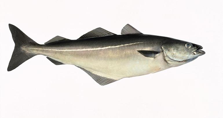 fogonero-noruego-pescaderias-promocion