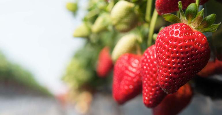 fresas-cuna-platero