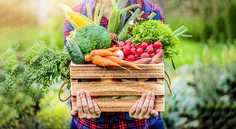 Frutas y hortalizas: la política de promoción de la UE es una herramienta esencial para mejorar la competitividad e impulsar el consumo