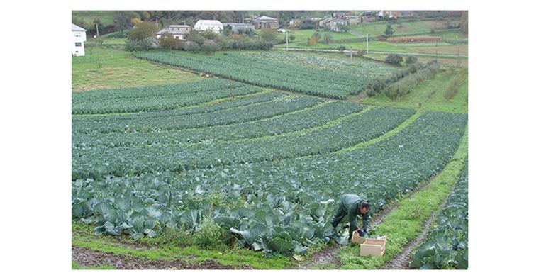 freshcut-labregos-lugo-verduras
