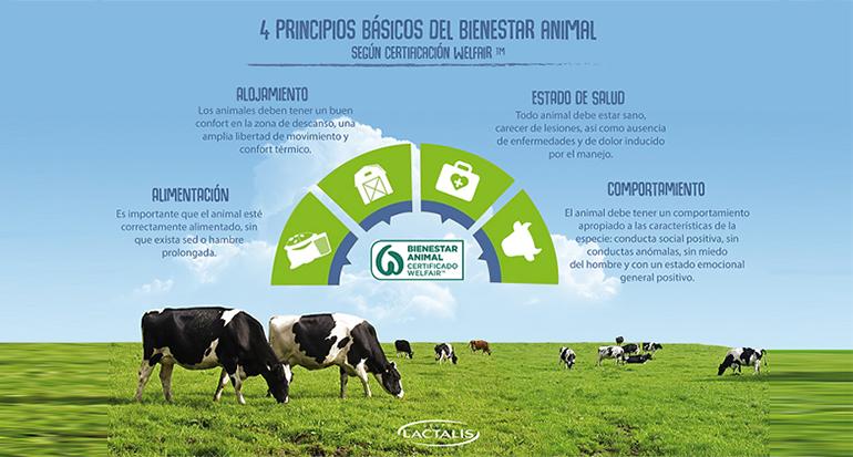 El Grupo Lactalis es la empresa láctea con mayor número de granjas españolas certificadas en bienestar animal