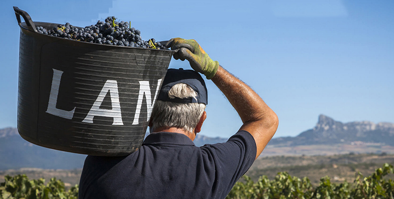 las-bodega-estrategia-sostenibilidad-vinos-rioja-viticultura