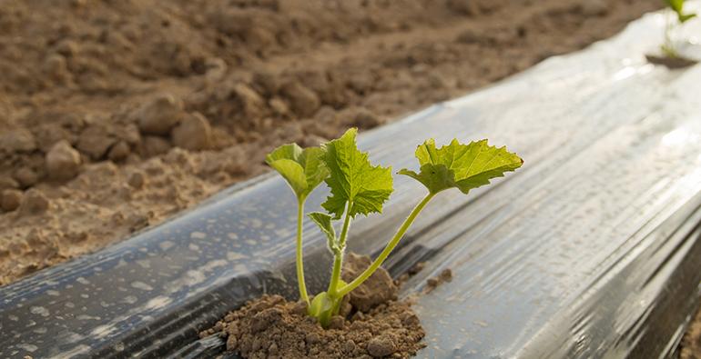 Las legumbres ecológicos de Castilla-La Mancha se promocionan en Biofach