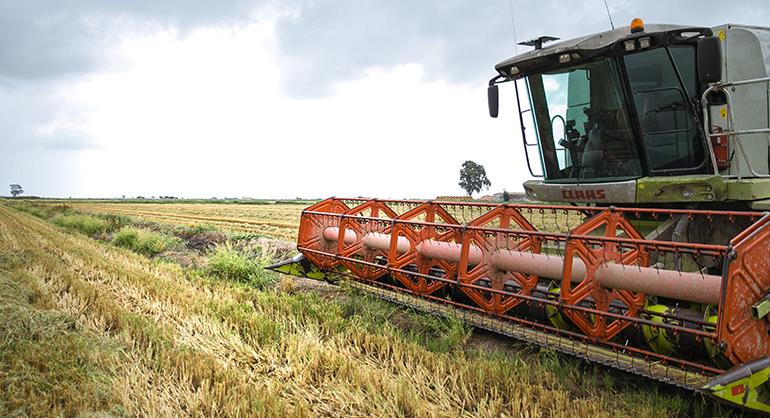 Nespresso dona 152 toneladas de arroz a Bancos de Alimentos de toda España a través del reciclaje de sus cápsulas