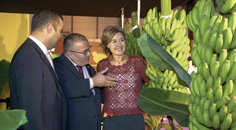 platano-canarias-fruit-attraction