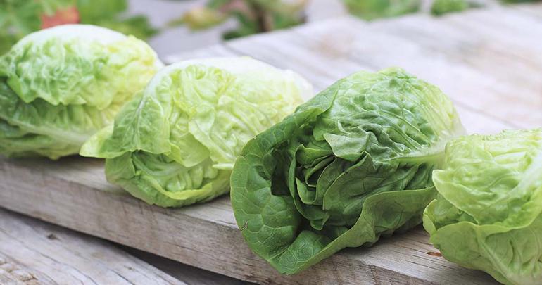 primaflor-lechuga-verdura-preferida-observatorio-greenlovers