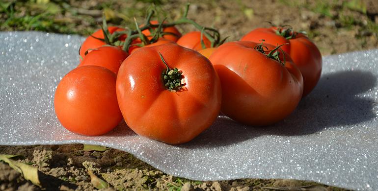 sealed-air-embalaje-tomates-espuma