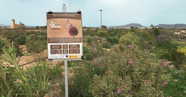 surinver--agricultura-sostenible-alicante
