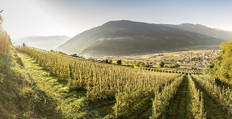 vip-val-venosta-manzanas-italia-campos