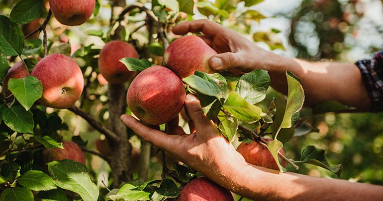 vip-val-venosta-manzanas-calidad-italia